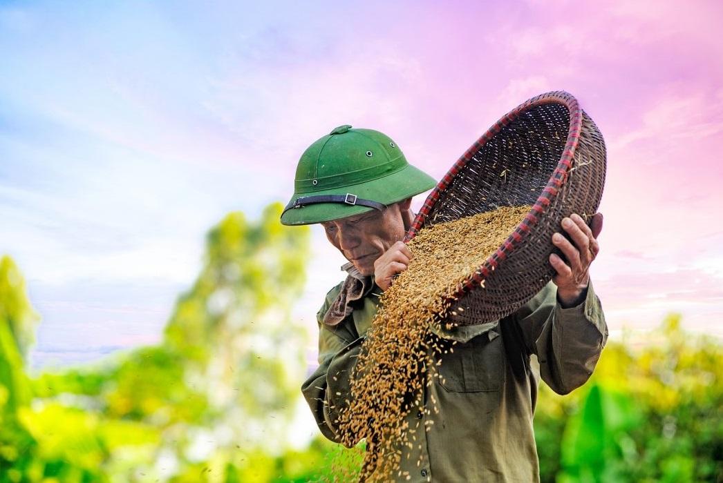 Produksi beras menyusut